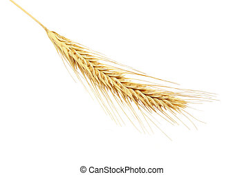 Barley Ears - Single barley ear isolated on white background