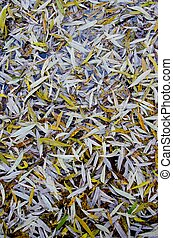 Willow leaves fall on ground in autumn background - Willow...