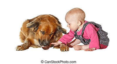 Young baby caressing a faithful pet dog - Cute young baby...