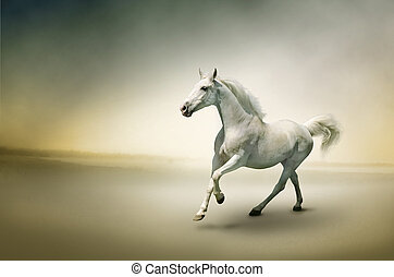 White horse in motion  - Photo of white horse in motion