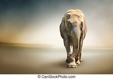 foto, luxo, elefante