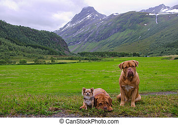 Pet band travelling about Norway - Funny pet band travelling...