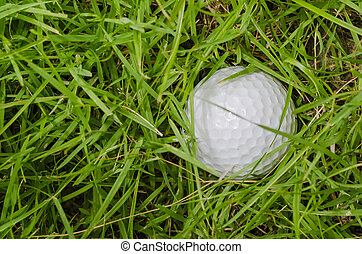 Golf Ball in the rough - A Golf Ball lying in the rough
