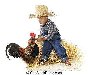 Chicken Feed - An adorable preschool farm boy hand feeding a...