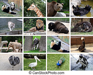 Animals collage - Collage of many different wild animals...
