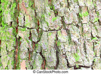 Background of bark of a tree