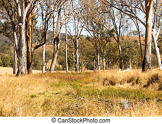 Rural Australia countryside water hole and gum trees scenic...