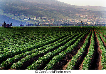 Travel Photos of Israel - Galilee - Cultivated field in Hula...