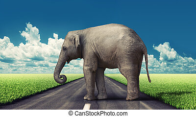 elephant on the road concept (photo and hand-drawing...