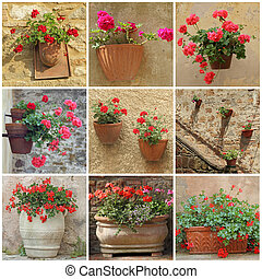 collage with geranium flowers in vintage  containers