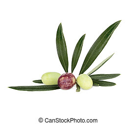 Olives - Green and Black Olives on branch Isolated On White