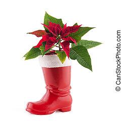 navidad, decoración, flor de nochebuena