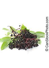 elder berries with leaves - fresh elderberries with green...