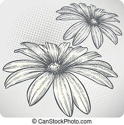 Blooming flowers, hand-drawing. Vector illustration