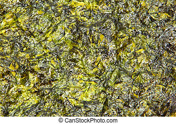 Large thin sheet of pressed seaweed pan fried in olive oil, texture background.