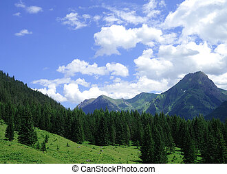 firs and mountains close to H?selgehr in the Lechtal alps