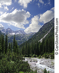 creek bed, firs, and mountains in the