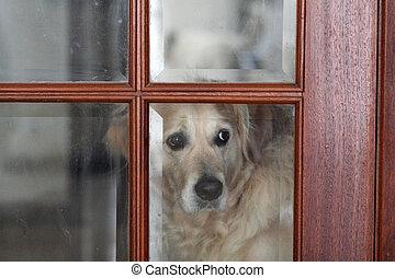 Sad dog looking through the glass of an interior door