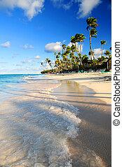 Tropical beach - Tropical sandy beach with palm trees in...
