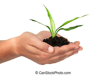 Careful - Men´s hands holding young plant. Take care concept...