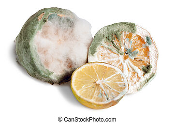 Mouldy Lemon - Mouldy Citrus Fruits Isolated on White...
