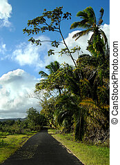 Backroad on Big Island - Curving blacktop backroad on the...