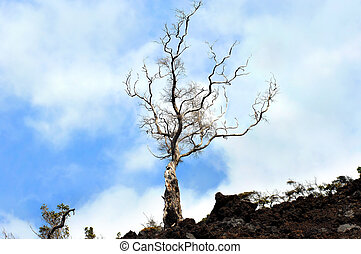 Against all odds - Lone tree stretches toward the blue sky...
