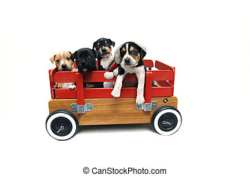 Adorable Gifts - Four puppies stand in a wooden red wagon...