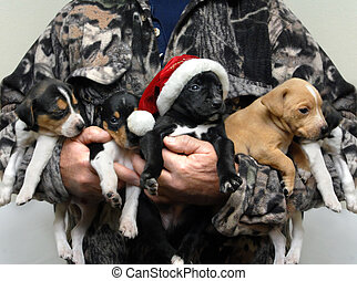 Adorable Hunting Dog for Christmas - Man dressed in...