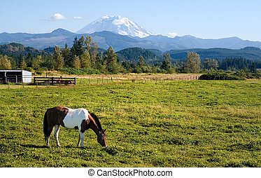 Paint Horse and Mount Rainier - A paint horse enjoys the...