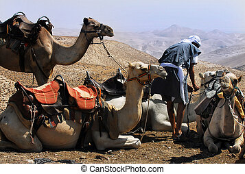 Travel photos of Israel -Judean Desert - Camel ride and...