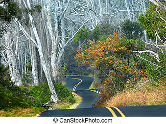 A curving dipping road - Big Island of Hawaii backroad...