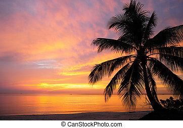 Sea view before the sunrise - A coconut tree silhouette on...
