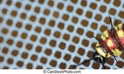 caterpillar - a caterpillar crawling