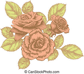 Bouquet of blooming roses, hand-drawing. Vector illustration