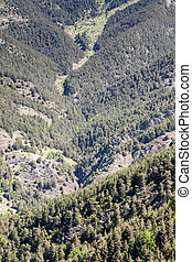 Pyrenees - Extensive forested valley in the Pyrenees in...
