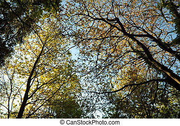 Trees in sping in Vigo, Galicia, Spain