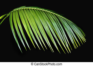 Green Palm Frond Agasint Black - Beautiful green tropical...