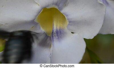 beetle pollinating