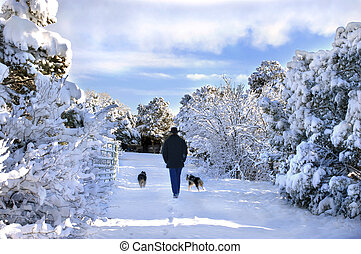 Amble through Winter Wonderland - Man and his two dogs amble...
