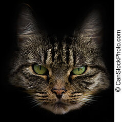 Cat face or portrait - Cat face with beautiful eyes and a...