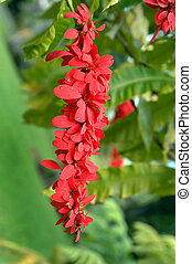 Blossoming Wild Poinsettia - A slender cluster of red wild...
