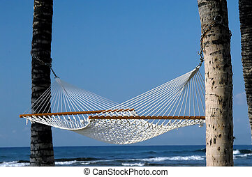 Chilling in the breeze - Empty hammock hangs from two palm...