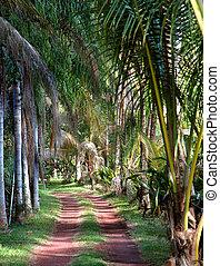 Big Island One Lane