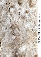 eucalipto, árvore, fundo