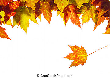 Hanging Fall Maple Leaves Border Isolated on White...