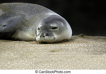 Awake and Aware - Endangered and protected monk seal opens...
