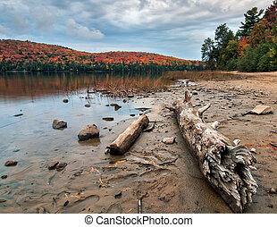 Lake Shore Log With Dramatic Autumn Trees