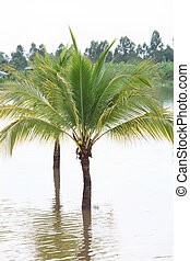 coconut tree and water flood