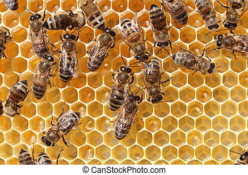 Work of the bees in hive - Bees convert nectar into honey,...